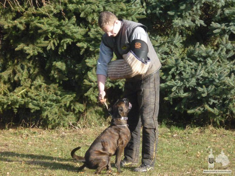 předchozí fotografie: Výcvik obran #10