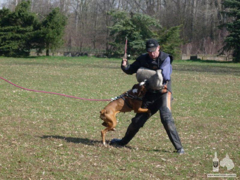 předchozí fotografie: Velikonoční výcvik 2010 #2