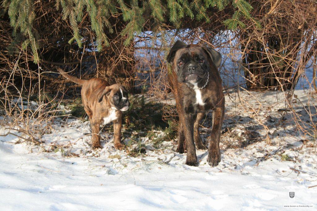 předchozí fotografie: Vánoce 2010 #30