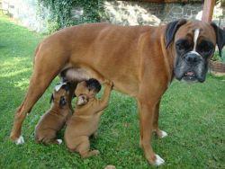 Genny a Getty mají čtyři týdny a užívají si s mámou a polobráškou Dastym léto na chalupě.