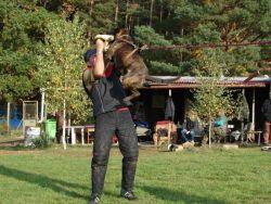 předchozí fotografie: Z výcviku 06