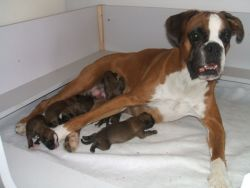 Fotky štěňátek krátce po jejich narození