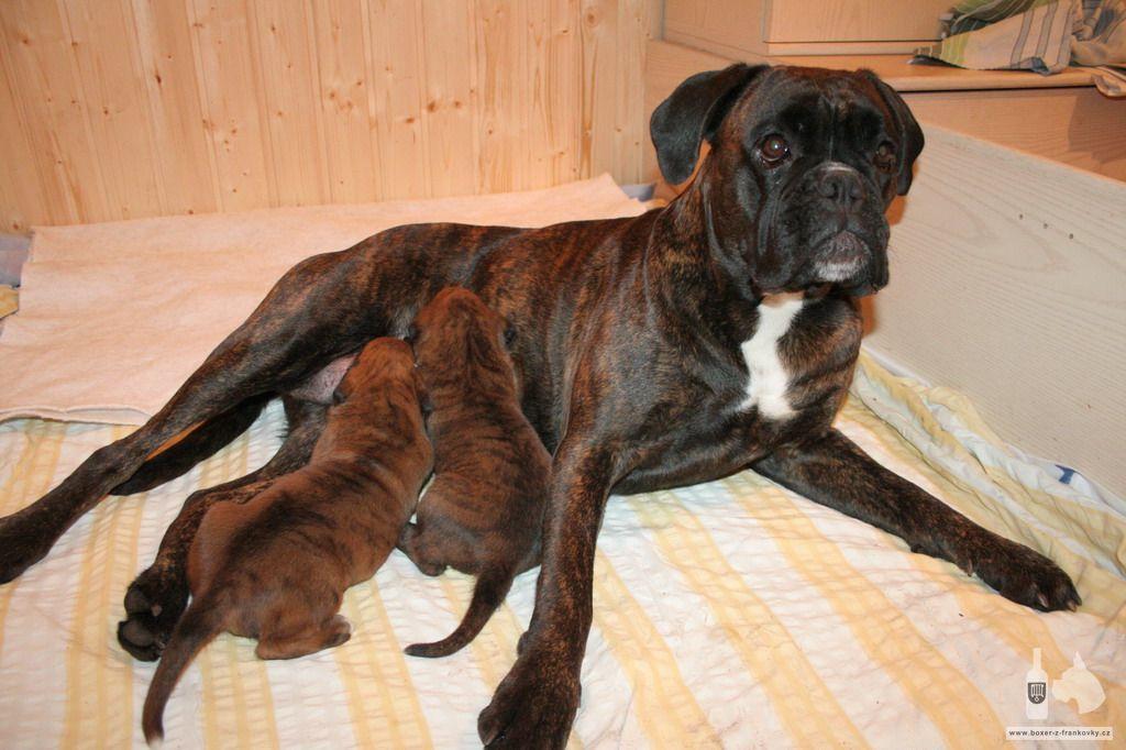 Fotky Eginy a Evana tři týdny po narození