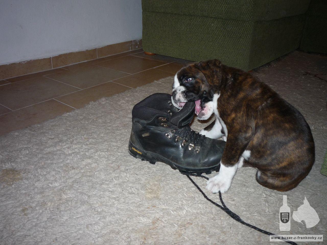 následující fotografie: Dasty - nový člen naší rodiny 09