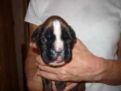 Fotka štěňat 13 dní po jejich narození (11. listopadu 2010)