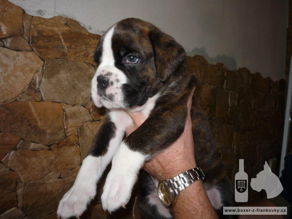 následující fotografie: Dasty - nový člen naší rodiny 03