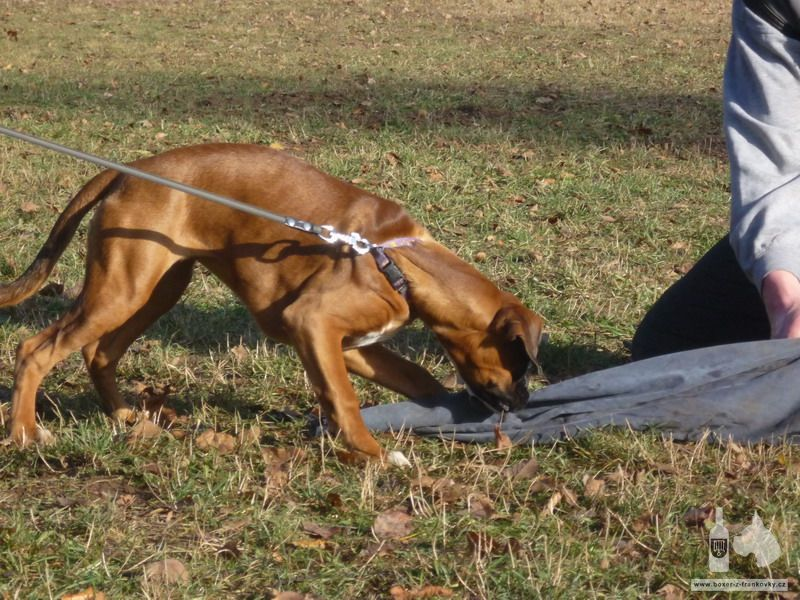 následující fotografie: Výcvik obran #06
