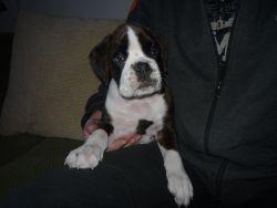 Dasty Kronebox - nový člen naší rodiny