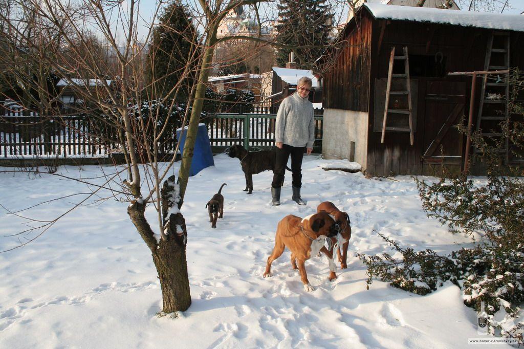 předchozí fotografie: Vánoce 2010 #25