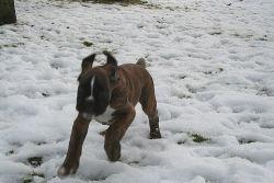 Noky, Dorotka, Dara a Evan si užívají zbytků sněhu při lednové oblevě.