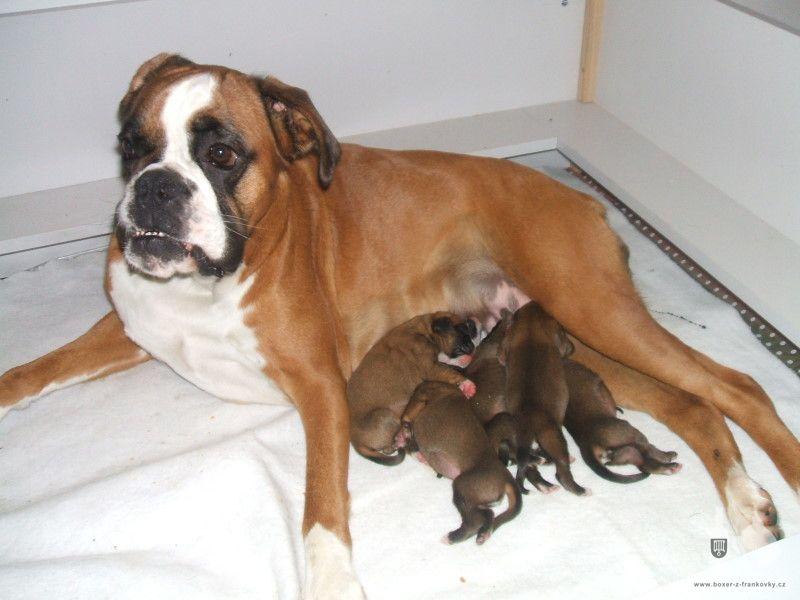 předchozí fotografie: Krátce po narození 1