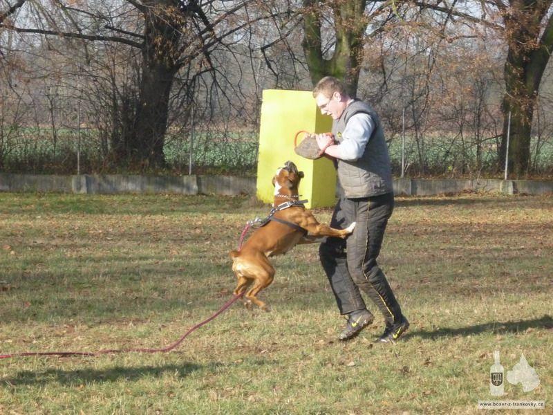 předchozí fotografie: Výcvik obran #09