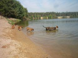 Štěňata se seznamují s vodou
