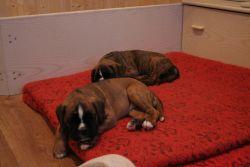 Fotky Eginy a Evana v šestém týdnu po narození