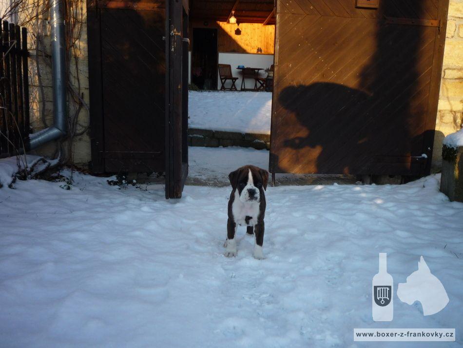 následující fotografie: Dasty - nový člen naší rodiny 08